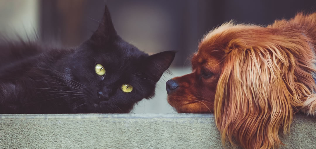 Should I allow pets in my Investment Property?